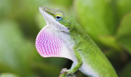 6 Jenis Reptil Lucu yang Bisa Merubah Pandanganmu Tentang Hewan Ini