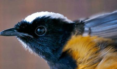 Beberapa Penyebab Burung Katarak yang Harus Kamu Waspadai
