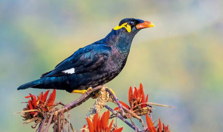 Rekomendasi Jenis Burung Beo Terbaik yang Suka Dipelihara