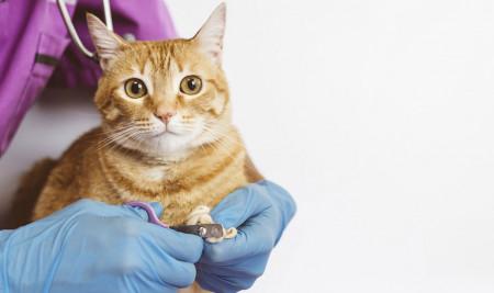 6 Cara Memotong Kuku Kucing Yang Benar dan Aman Tanpa Tergores
