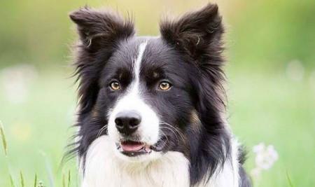 9 Bau yang Tidak Disukai Anjing, Pasti Akan Menjauh!