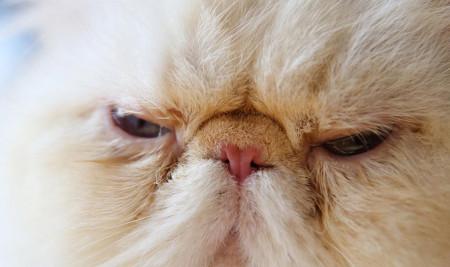 Jangan Panik! Ini Penyebab Mata Kucing Berair dan Cara Mudah Mengobatinya di Rumah