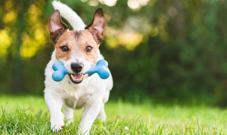Pilihan Mainan Terbaik untuk Anjing Peliharaan & Tips Memilihnya
