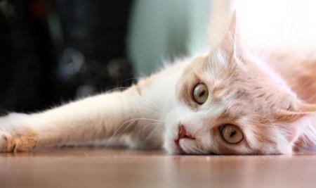 Mulut Kucing Bengkak? Simak Yuk Penyebab dan Cara Mengobatinya