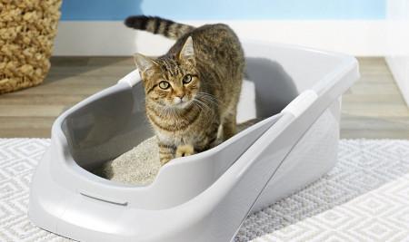 Ini Ciri-Ciri Kucing Mau Pup Yang Wajib Kamu Ketahui