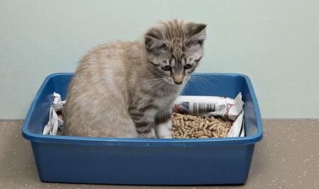 Jangan Asal, Begini Cara Mencuci Pasir Kucing Yang Benar Agar Lebih Hemat