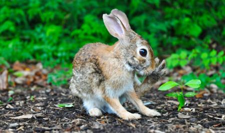 Bagaimana Cara Memandikan Kelinci dengan Benar dan Praktis? Ini Tutorial dan Tipsnya