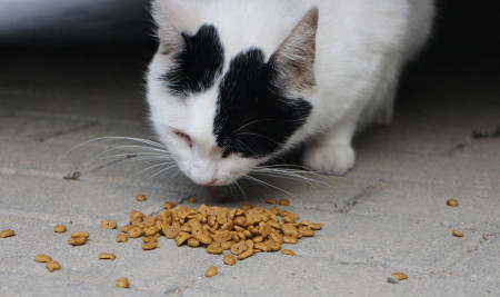 6 Jenis Makanan Kucing Yang Bagus untuk Mengatasi Bulu Rontok