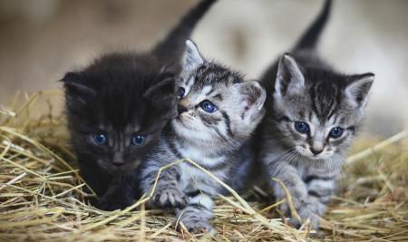 Mengenal 9 Masa Pertumbuhan Kucing Kesayangan di Rumah