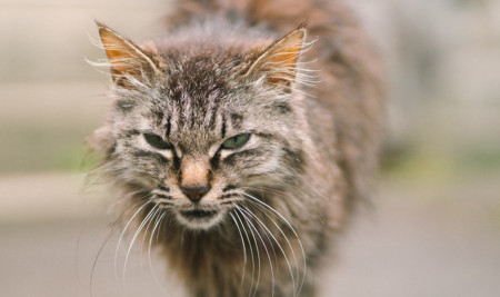 Jangan Panik, Ini 6 Ciri - Ciri Kucing yang Sakit dari Perubahan Perilakunya Sehari-hari