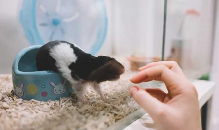 Bersih dan Aman! Ini Dia 7 Cara Memandikan Hamster dengan Benar