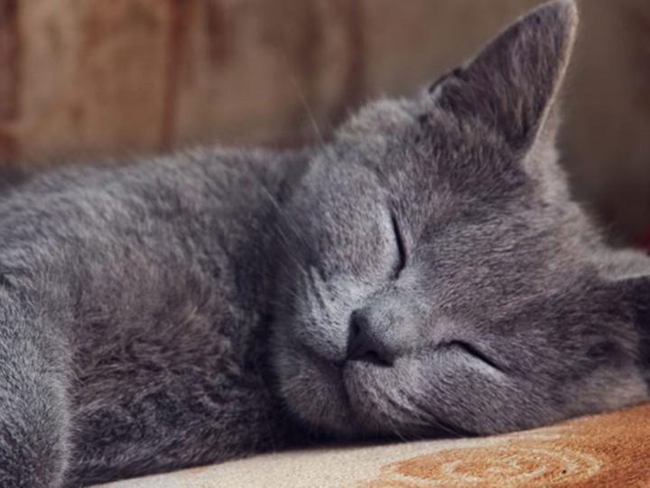10 Penyebab Kucing Tidur Terus Bahkan Hingga Tidak Mau Makan Pintarpet