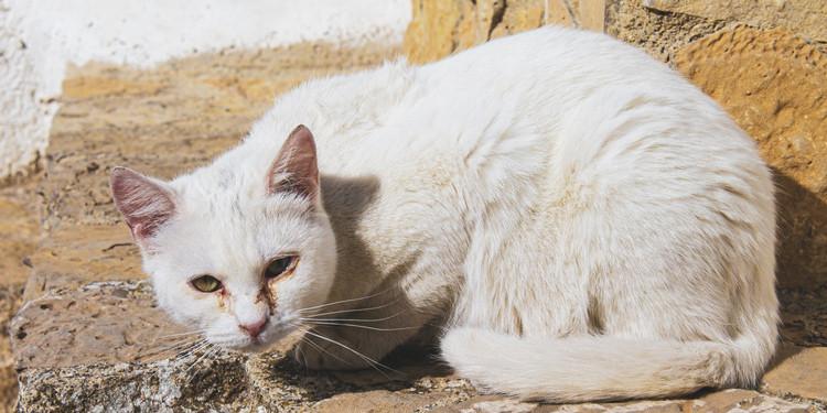 Ini 6 Ciri Ciri Kucing Sakit Ini Perlu Kamu Waspadai Pintarpet