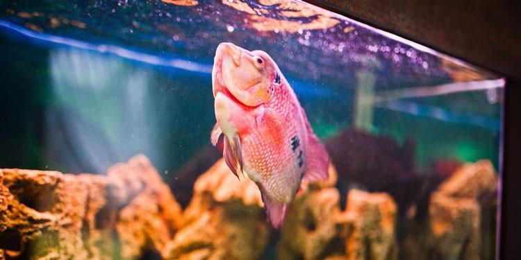 Kenali Ciri Ciri Ikan Stres Penyebab Cara Mengatasinya Pintarpet