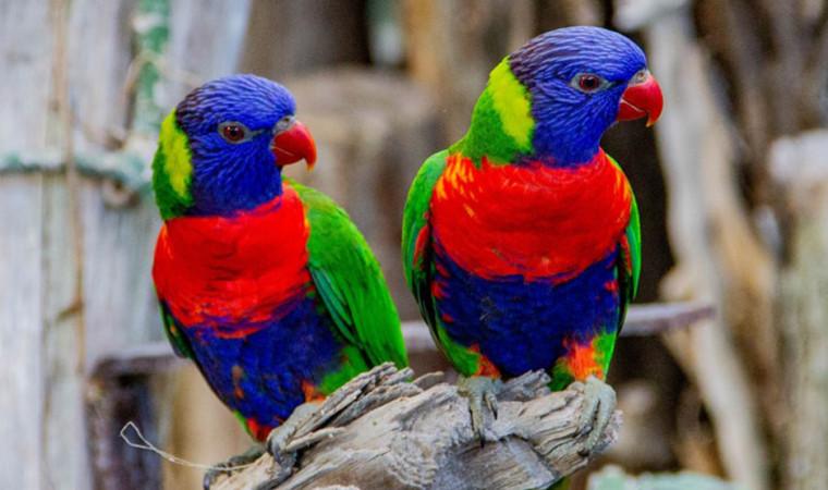 Fantastis! 10 Burung Kicau Termahal di Dunia yang Harganya Hingga Miliaran