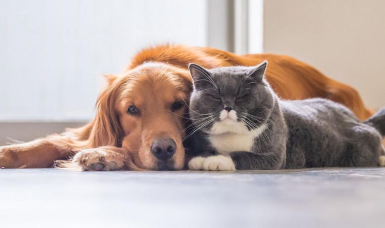Ini Bukti 6 Jenis Anjing yang Bisa Akur Tinggal Bareng Sama Kucing