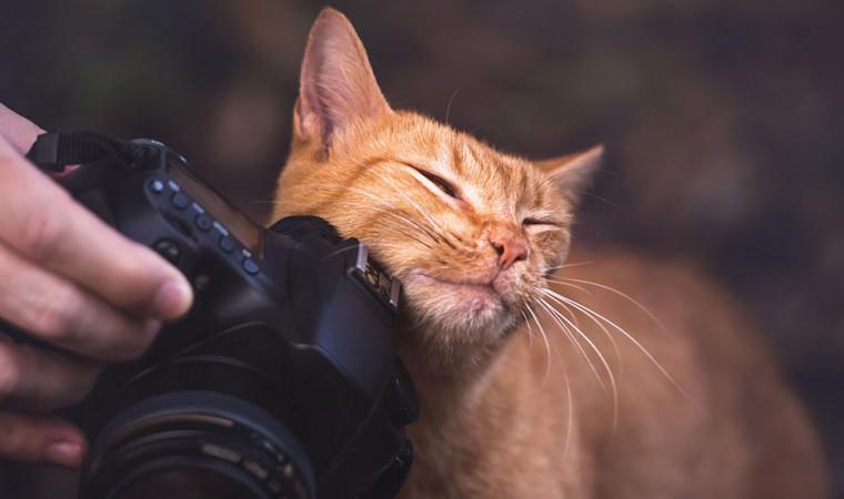Kucing Kamu Galak dan Penakut? Ketahui 4 Cara Menjinakan Kucing Paling Ampuh!