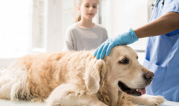 Jangan Dibiarkan, Ketahui 7 Cara Mengobati Demam pada Anjing