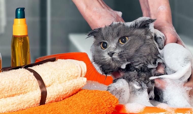 Cara Menggunakan Shampo Kutu Kucing dan Pencegahan Agar Kutu Segera Hilang