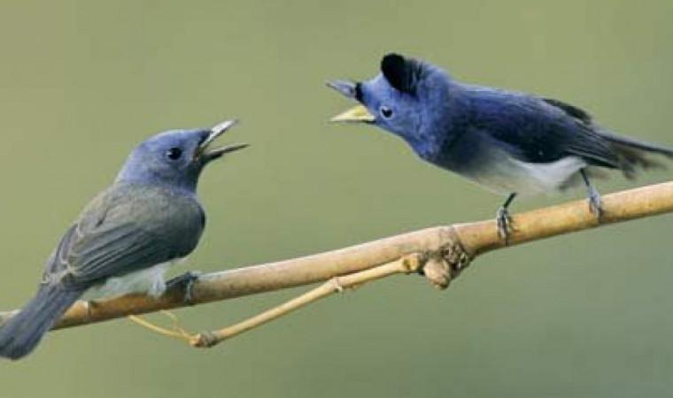 Dijamin Gacor! Ini Jenis Burung yang Rajin Bunyi dan Gampang Dilatihnya