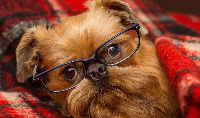 Stop! Jangan Berikan 9 Makanan yang Berbahaya untuk Anjing Ini!
