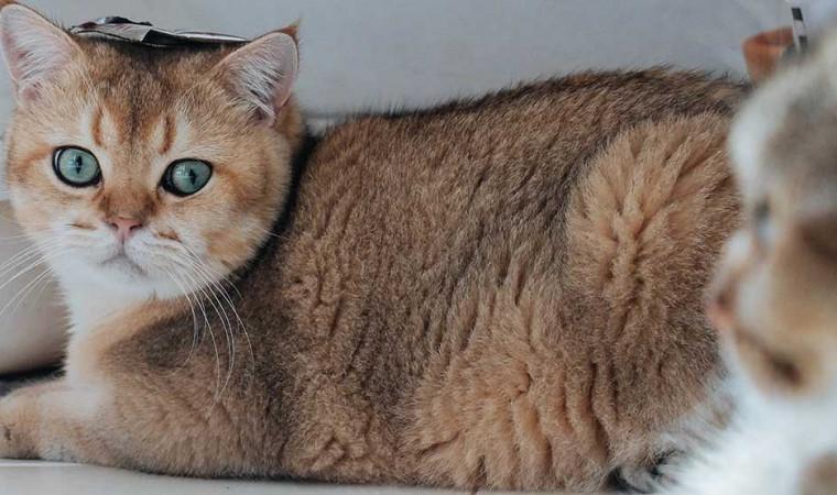 Yuk, Ketahui 8 Cara Mengatasi Kucing Stress Sekarang Juga!