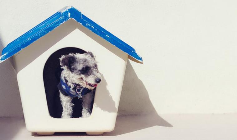 Gak Sangka, Ternyata Ini Manfaat Pelihara Anjing Bagi Kesehatan Tubuh Kita!
