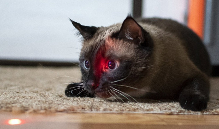 Ternyata Ini Alasan Kenapa Kucing Suka Mengejar Sinar Laser