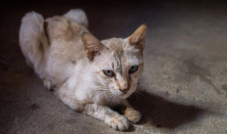 Waspadai! Ini 5 Penyebab Kenapa Kucing Tiba-tiba Kehilangan Berat Badannya