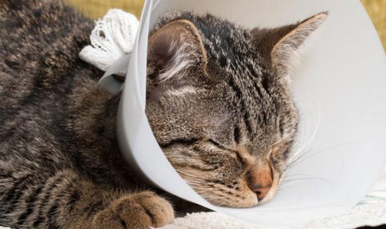 Tenang, Begini Cara Kamu Mengobati Luka Kucing Agar Cepat Kering