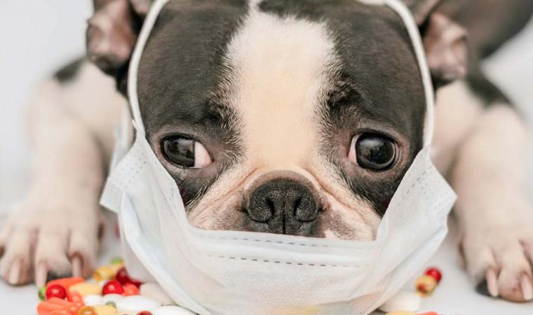 9 Jenis Penyakit pada Anjing yang Sering Menyerang