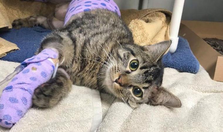 Sebelum Terlambat, Kenali Cara Mengobati Kaki Kucing Pincang dengan Ampuh