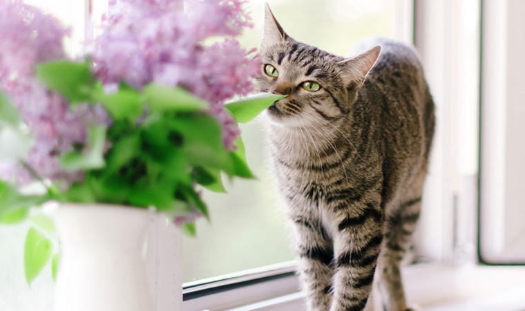 Ini 8 Bau yang ternyata Tidak Disukai Oleh Kucing, Ampuh untuk Mengusir Kucing