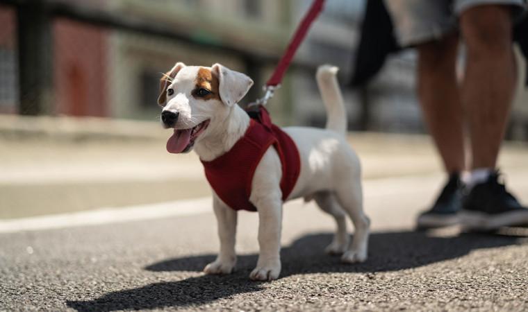 Wajib Tahu, Pelajari 7 Cara Mengikat Anjing yang Benar Berikut Ini!
