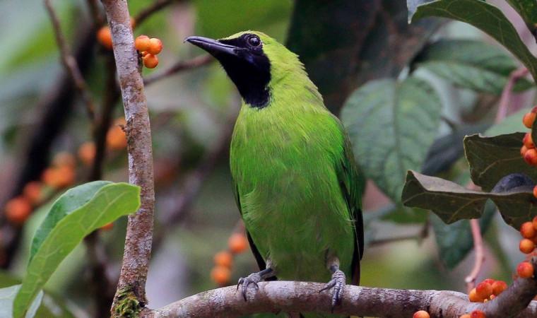 6 Cara Merawat Burung Cucak Ijo Agar Gacor Suaranya Bagus Pintarpet