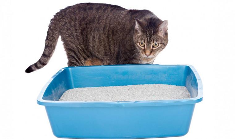 Jangan Sembarang Tempat, Ini 8 Tempat Menaruh Litter Box Kucing yang Benar