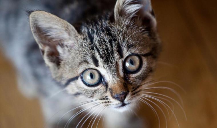 Gak Usah Bingung, Begini Tips Lengkap Cara Merawat Kucing Kampung Agar Gemuk dan Bersih