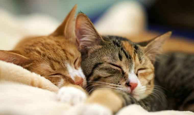 Kumpulan Nama Kucing Betina Lucu, Singkat, Mudah Diingat, Beserta Artinya