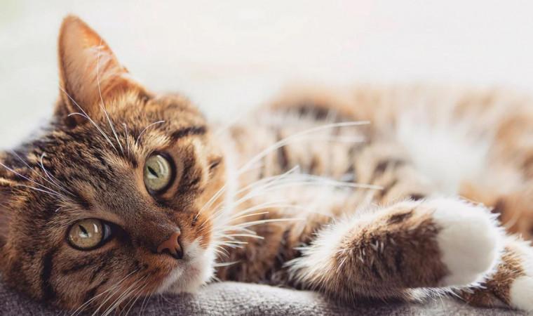 Kumpulan Nama Kucing Jantan Keren, Unik, Mudah Diingat, Beserta Artinya