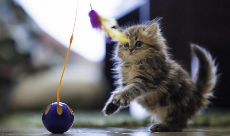 Perlengkapan dan Aksesoris Kucing Peliharaan yang Wajib Dimiliki di Rumah
