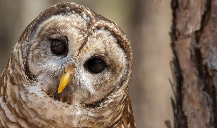 Dijamin Aman! Gunakan 7 Cara Merawat Burung Hantu di Rumah Sendiri