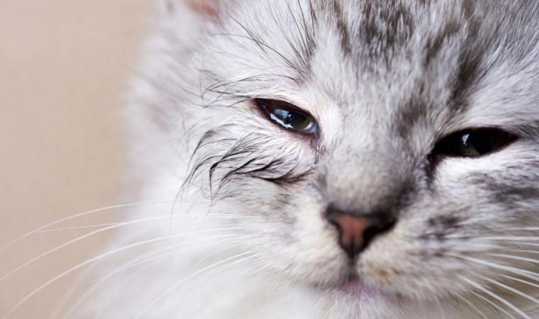 Mata Kucingmu Terlihat Sakit? Ini Cara Mengobati Kucing Sakit Mata yang Aman!