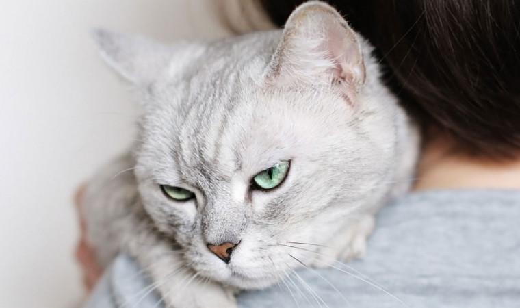 Mendadak Agresif! Ini Ciri-Ciri Kucing Stres dan Cara Mudah Mengatasinya
