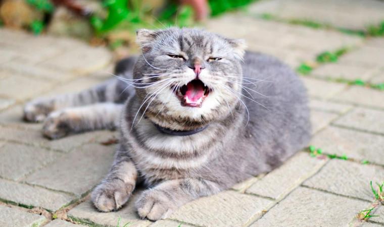 Kenapa Kucing Bersin Terus? Ternyata Ini Penyebab dan Cara Mengatasinya!