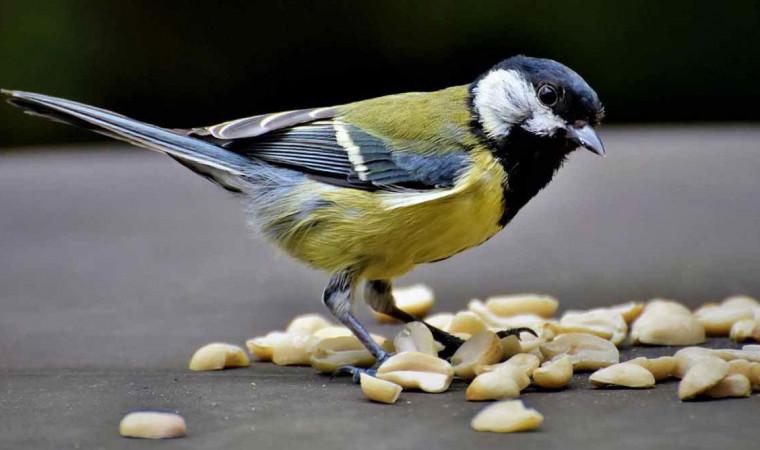 Jangan Dikasih, Ini 6 Makanan yang Berbahaya Bagi Burung Pada Umumnya