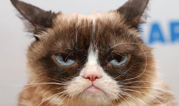 6 Akun Kucing Lucu yang Wajib Kamu Follow Sekarang Juga!