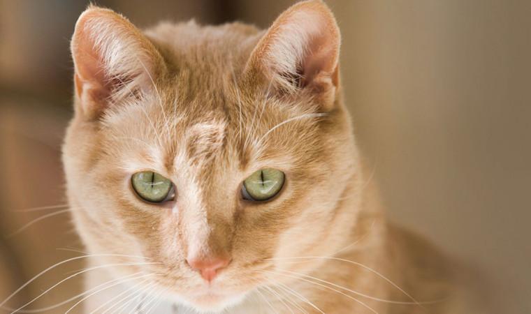 Gak Pakai Mahal, Ini Cara, Manfaat, dan Biaya Steril Pada Kucing!
