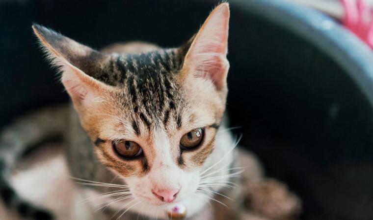 Ini Cara Ampuh Agar Kucing Tidak Buang Kotoran Sembarangan!