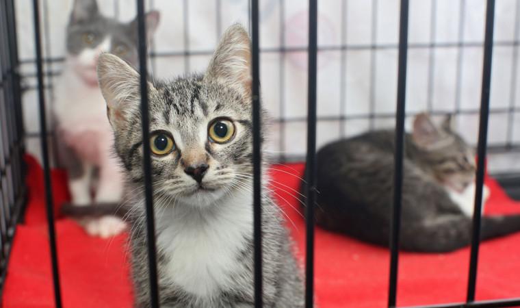 Cara Membuat Kandang Kucing Sederhana | Kardus, Kayu, Besi, Pipa