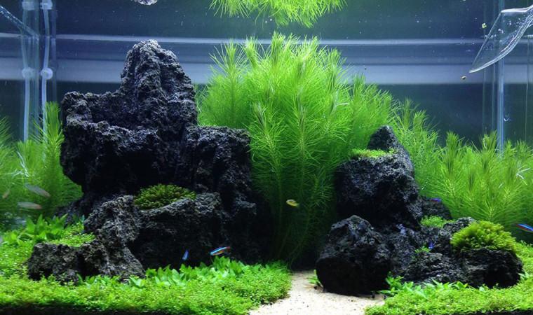 7 Jenis Batu Aquascape yang Ada di Sekitar dan Hal-Hal yang Harus Diperhatikan